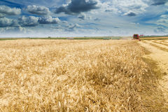 Combine harvester in action on barley field Stock Images