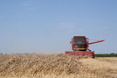 Combine Harvester in Action. Combine harvesting wheat plants on field near town Royalty Free Stock Image