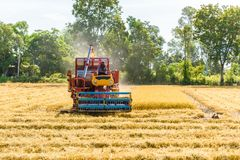 Combine harvester in action on rice field. Harvesting is the pro. Cess of gathering a ripe crop from the fields in thailand stock images