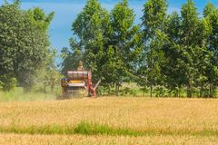 Combine harvester in action on rice field. Harvesting is the pro. Cess of gathering a ripe crop from the fields in thailand royalty free stock photography