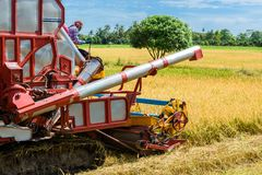 Combine harvester in action on rice field. Harvesting is the pro. Cess of gathering a ripe crop from the fields in thailand royalty free stock images