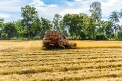 Combine harvester in action on rice field. Harvesting is the pro stock image