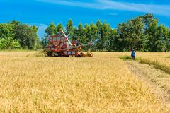 Combine harvester in action on rice field. Harvesting is the pro royalty free stock photos