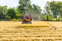 Combine harvester in action on rice field. Harvesting is the pro. Cess of gathering a ripe crop from the fields in thailand royalty free stock image