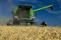 Combine harvester in action on wheat field. Stock Images