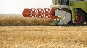 Combine harvester in action on wheat field. Stock Photos