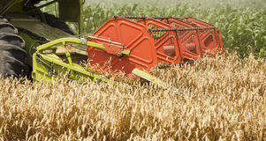 Combine harvester in action on wheat field, close-up shot of combine header. Royalty Free Stock Image