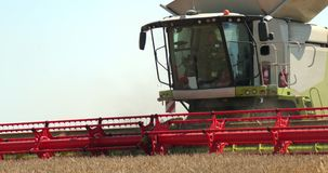 Combine harvester in action on wheat field. Harvesting is the process of gathering a ripe crop from the fields. Prores stock video footage