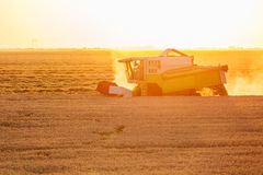 Combine harvester in action on wheat field at sunset. Royalty Free Stock Image