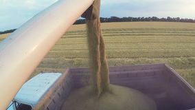 Combine harvester in action on wheat field, unloading grains. Harvesting of grain crops. Combine harvester in action on wheat field, unloading grains stock footage