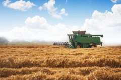 Combine harvester agriculture machine harvesting golden ripe whe royalty free stock image