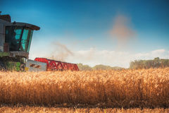 Combine harvester agriculture machine harvesting golden ripe wheat field royalty free stock photo