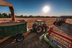 Combine harvester agriculture machine harvesting golden ripe whe. At field Stock Photo