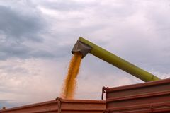 Combine harvester auger unloading harvested corn into tractor tr Royalty Free Stock Images