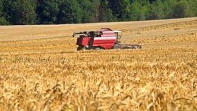 Combine harvester back in wheat field