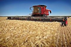 Combine harvester Cereal crop Stock Photos