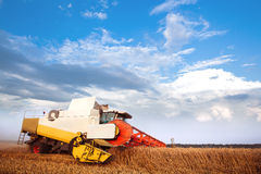 Combine-harvester collecting the wheat field.. Blue sky and clouds at the background Stock Photo