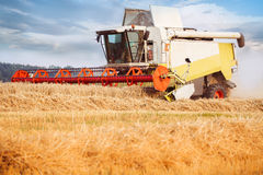 Combine-harvester collecting the wheat field.. Golden ears. Dramatik sky Royalty Free Stock Photos