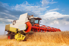 Combine-harvester collecting wheat grain. Golden field in the lights of summer sun.Cloud blue sky. Horizontal. Working concept Stock Photo