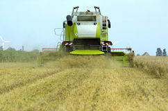 Combine harvester corn earning. Corn earning time in summer with combine harvester stock photo