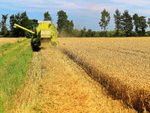 Combine harvester cutting crop Royalty Free Stock Image