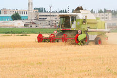 Combine harvester on field. A lone combine harvester move purposefully across a wheat field Royalty Free Stock Image