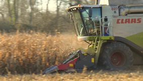 Combine harvester in a field of corn stock video