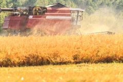 Combine harvester in field during harvesting Royalty Free Stock Image