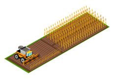 Combine Harvester Gathering Wheat on Field Vector. Contemporary grain combine harvester gathering wheat on field isometric vector illustration. Seasonal Royalty Free Stock Images