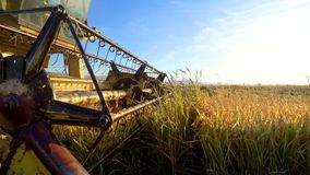 Combine harvester gathers the rice crop royalty free stock images