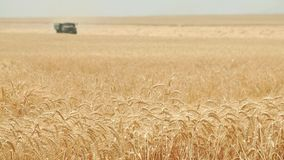 Combine harvester gathers the wheat crop. Agriculture and harvester   Combine harvester gathers the wheat crop stock video footage