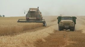 Combine harvester gathers the wheat crop stock video