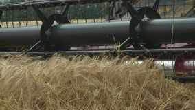 Combine harvester gathers the wheat crop. Agriculture and harvester   Combine harvester gathers the wheat crop stock video