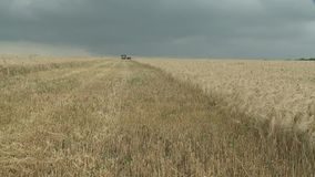 Combine harvester gathers the wheat crop stock footage