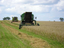 Combine harvester. Green working harvesting combines in the field of wheat Stock Photography