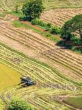 Combine harvester on harvest field Stock Image