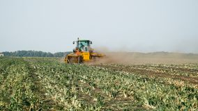 Combine harvester harvest onion. Bezenchuk, Russia - September 14: Combine harvester and a tractor in a field harvest onion on September 14, 2017 in Bezenchuk stock footage