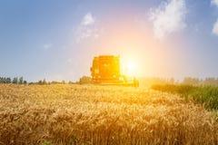 Combine harvester harvest ripe wheat Royalty Free Stock Photos