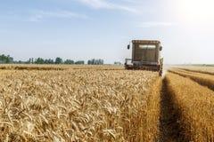 Combine harvester harvest ripe wheat Stock Image