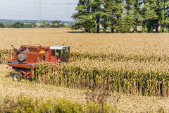 Combine harvester during harvesting corn Stock Photos