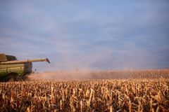Combine harvester harvesting maize at sundown. With a low angle view of the rear end and arm over rough cut stubble Stock Images