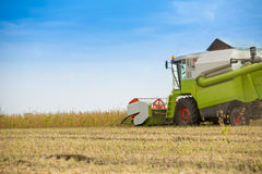 Combine harvester harvesting soybean at field Stock Photo
