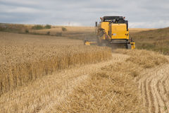 Combine harvester. Combine harvesting wheat, rear view Royalty Free Stock Photos