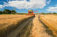 Combine harvester harvesting wheat on sunny summer day Stock Photography