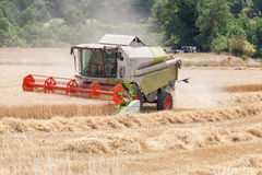 Combine harvester harvesting wheat for winter  feed for livestoc Stock Image