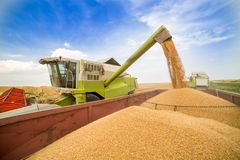 Free Combine Harvester In Action On Wheat Field. Royalty Free Stock Photos - 119245648