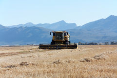 Combine harvester on a large field. Stock Photography