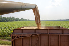 Combine harvester load wheat in the tractor trailer Royalty Free Stock Photos