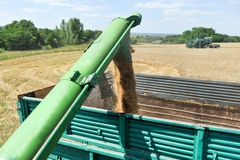 Combine harvester load wheat in the truck Stock Image