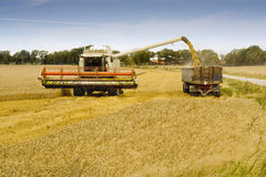 Combine Harvester Loading Grain into a Trailer Stock Photos